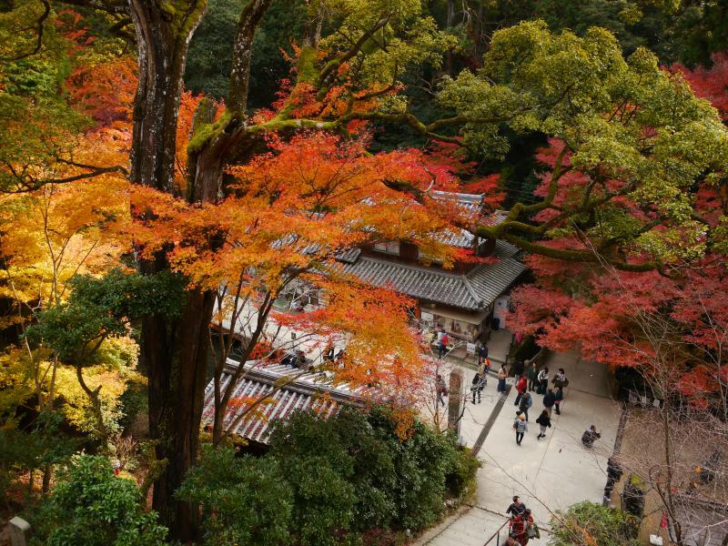 書写山(兵庫県姫路市)円教寺の紅葉